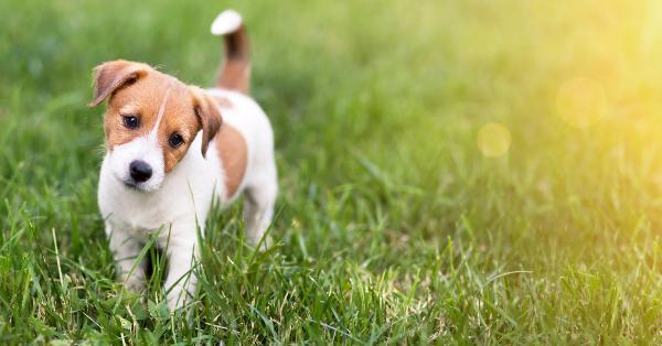 dog standing in grass